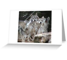 Wolf pack waiting for their prey Greeting Card