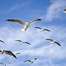 On the wing - seagulls by Norman Repacholi