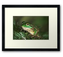 The Southern Bell Frog Framed Print