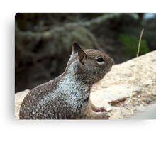 Ocean Squirrel Canvas Print