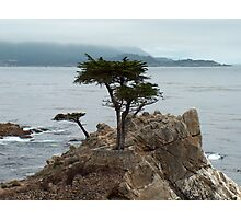 lone cypress tree Photographic Print