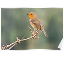 Robin in the Wild Poster
