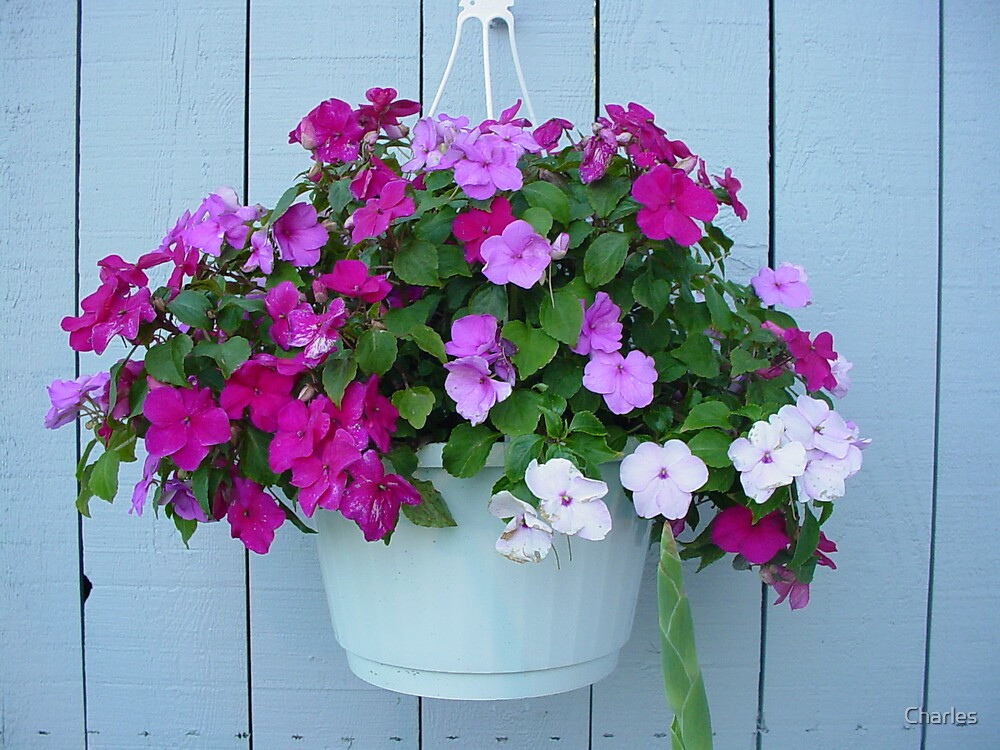 Flower Basket by Charles