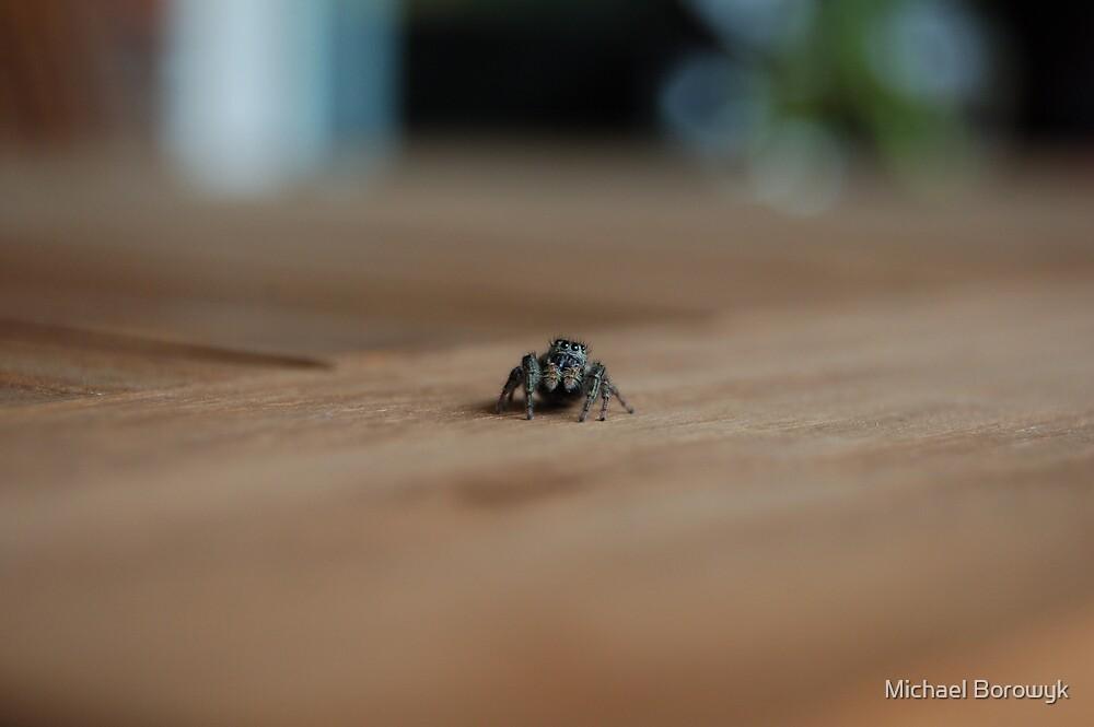 spider by Michael Borowyk