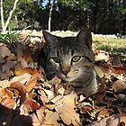 Playing in Leaves by EmmaLeigh