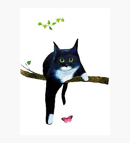 Cute Tuxedo Cat Photographic Print