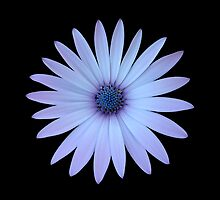 Blue Flower by David Wilson