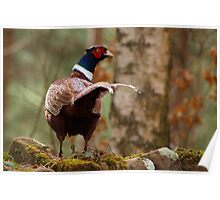 The Pheasant's Tail Poster