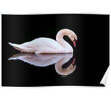 Swan at Sundown Poster