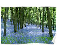 Spring Bluebell Wood Poster
