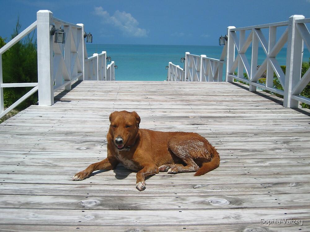 Chillin' Bahamian Style by Sophia Vaizey