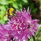 Chive Bee by Jen  Govey