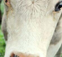 Friendly cow Sticker