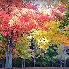 hug a tree & make it Blush by Tgarlick