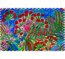 Flambouyants in bloom,Virgin Islands Photographic Print