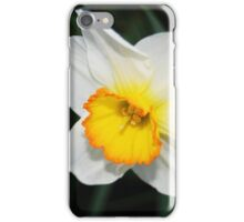 Daffodil with a Touch of Orange iPhone Case/Skin