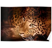 Chinese Leopard Poster