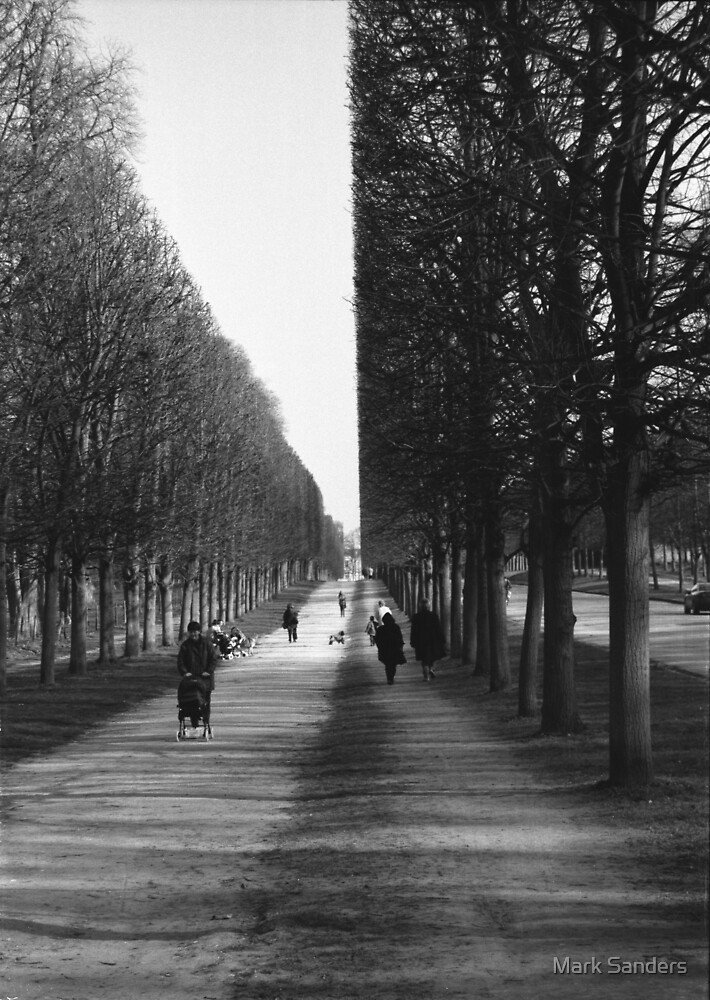 Versailles Trees by Mark Sanders