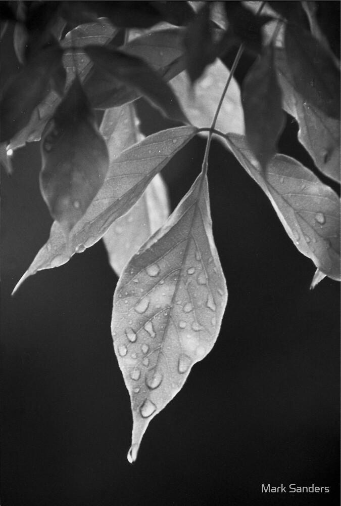 Wysteria leaf by Mark Sanders
