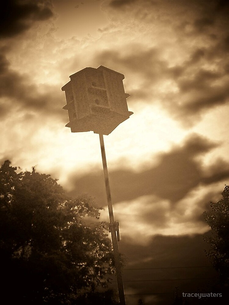 Lone Birdhouse by traceywaters