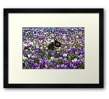 Easter Bunny in the Spring Framed Print