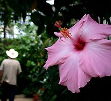 Cowboy and flower by johnhenryclay
