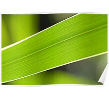 Leaf Lines Poster