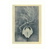 Tortoise Shell and Plant Skeleton Art Print
