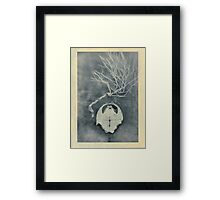 Tortoise Shell and Plant Skeleton Framed Print