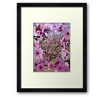 Blossom Beauty Framed Print