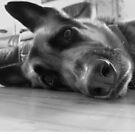A Dog's Life by Madita