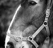 Jess The Horse by lightmonger