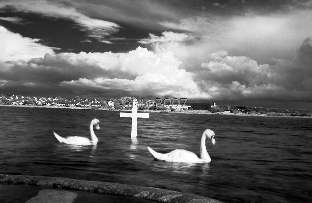 swans by gabe2007