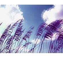 wind 2 Photographic Print