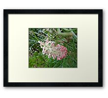 Pink Peeking Framed Print