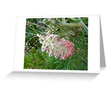 Pink Peeking Greeting Card