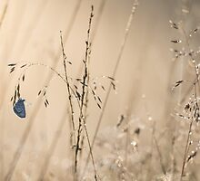 First light on a Silver Studded Blue by Natuuraandemuur