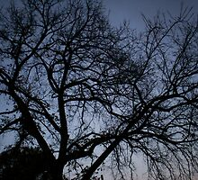 The branches of a tree in the night. by Avinash