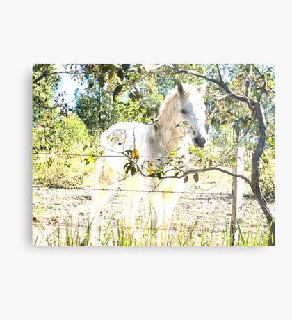 Equine dreams Metal Print