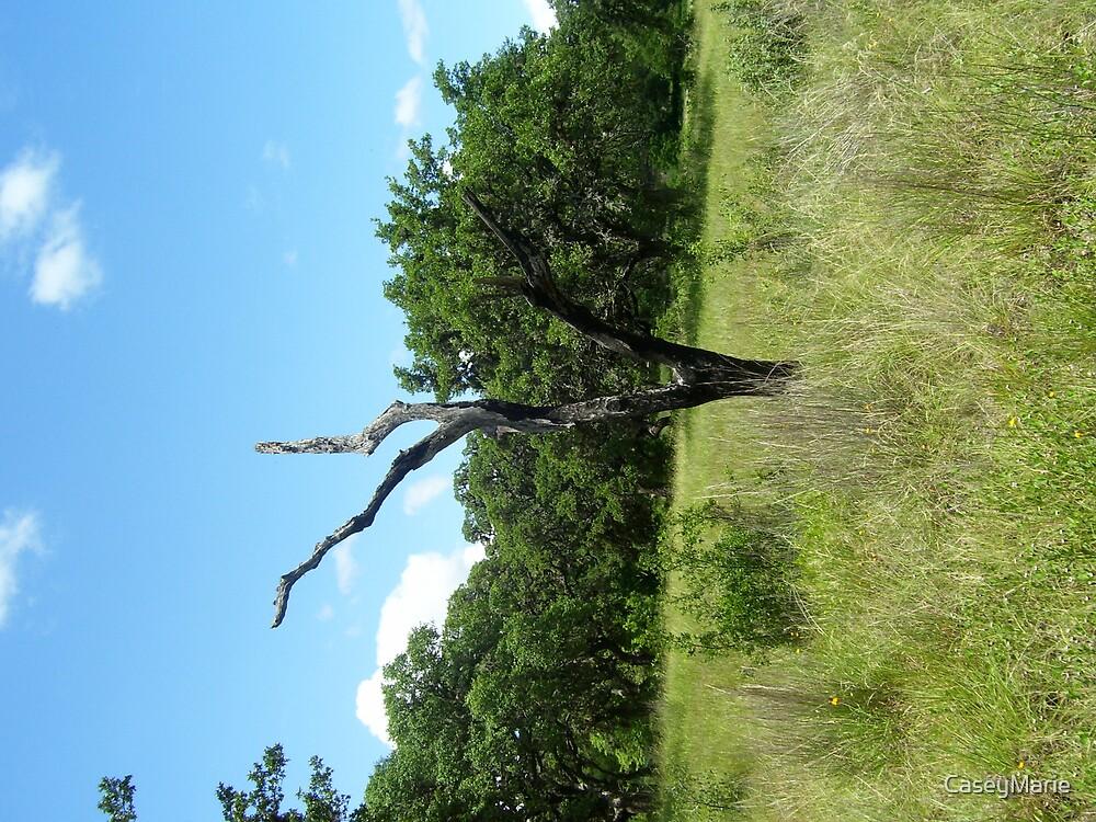 dead tree by CaseyMarie