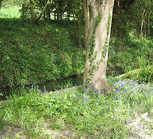 Brook & Blue Bells by SooBee