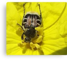 The Pollinater  Canvas Print