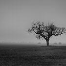 Tree In The Mist by Dave Godden