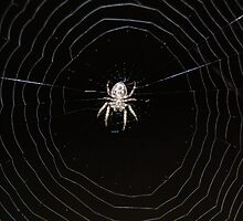spider's web by Ian  Taylor
