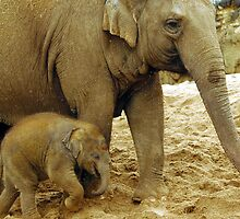 Elephant and baby by Fozzle