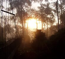 Sunrise at the rainforest canopy walk, Ghana by fergal