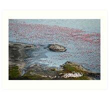 Flamingoes of Lake Nakuru, Kenya. Art Print