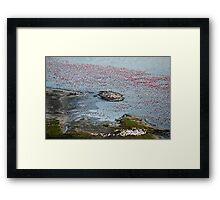 Flamingoes of Lake Nakuru, Kenya. Framed Print