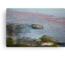 Flamingoes of Lake Nakuru, Kenya. Canvas Print