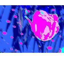 BLUE PINK TULIP Photographic Print